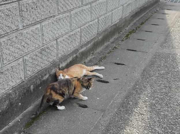 cat豊島DSC01627_ed
