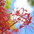 Photos: 赤い糸DSC01689_ed2