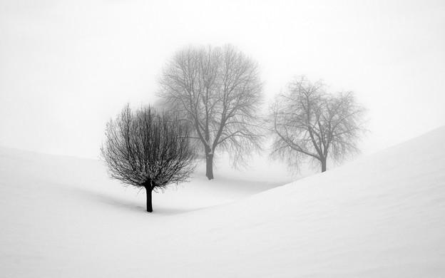 135847-winter-var2560sf
