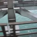 Photos: 53 橋の下には海が見える