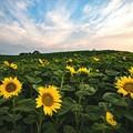 写真: 朝焼けの丘