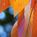 写真: 季節の色