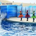 イルカ ショー