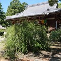 Photos: 萩原寺