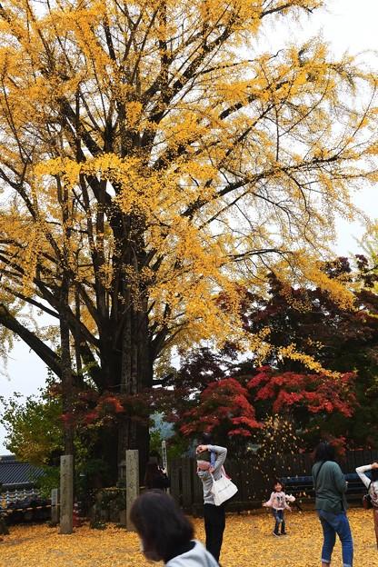 Photos: 秋日
