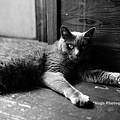 Photos: ponchat180812_DSC4273ぐりBW