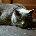 Photos: ponchat180812_DSC4293ぐり