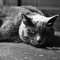 Photos: ponchat180812_DSC4293ぐりBW