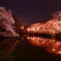 写真: 三嶋大社の夜桜が恋しくて・・・神池