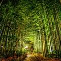 Photos: 竹林夜景 ~修善寺温泉~