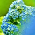 写真: GreenForest ~儚い紫陽花~