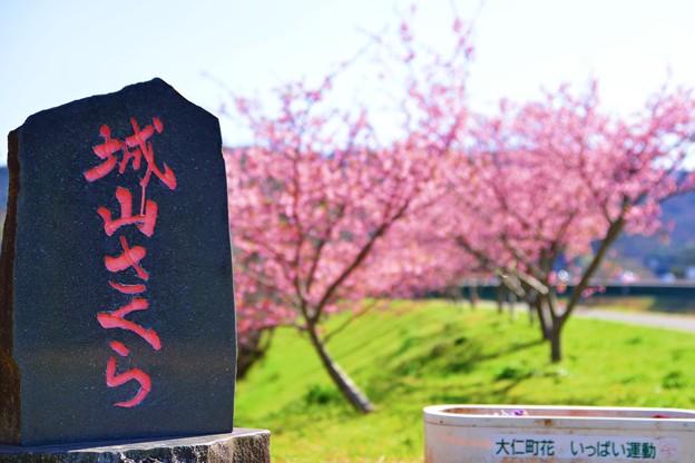 写真: ジョー山下の桜