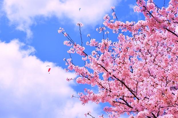 Photos: 弥生の空、風が強くても・・・