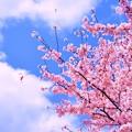 写真: 弥生の空、風が強くても・・・