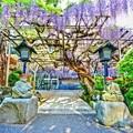 写真: そうだ、林泉寺へ行こう・・・