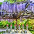 写真: そうだ、林泉寺へ行こう・・・多情仏心