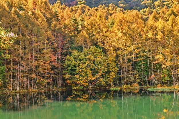 静かな湖畔の秋景色・・・御射鹿池