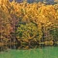 写真: 静かな湖畔の秋景色・・・御射鹿池