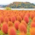 写真: 静かな湖畔の秋景色・・・箒木