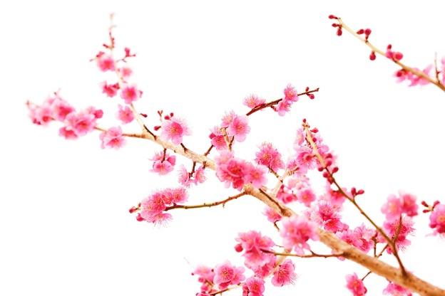 花ぞ昔の  香ににほひける
