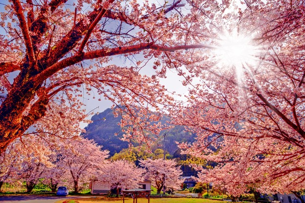 春の木漏れ日の中で・・・
