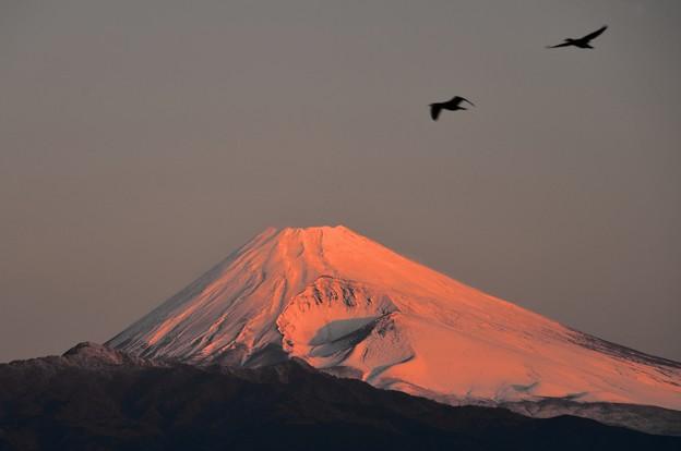 朝焼けの光の中に ~紅富士~