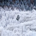 Photos: 冬が始まるよ・・・@Sun Meadows清里