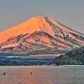 Photos: 氷点下3℃の風景 ~紅富士~