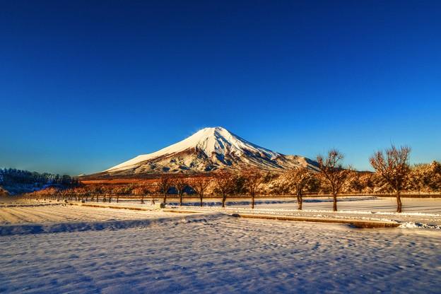 氷点下3℃の風景 ~快晴の朝富士~