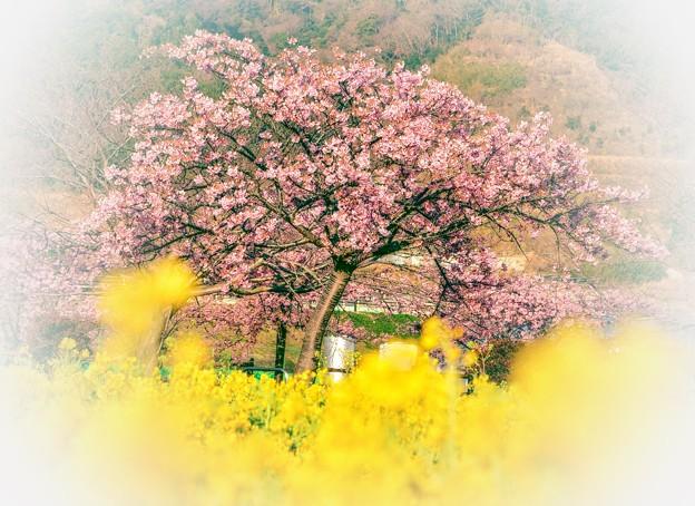 Photos: あ~ 春になったんだね・・・