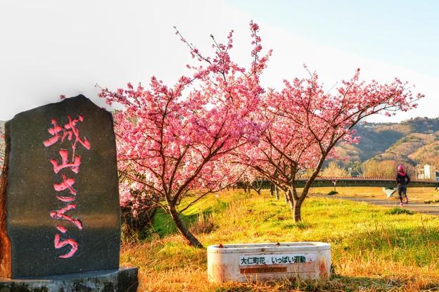 ジョー山下の桜 2020 ~其の弐~