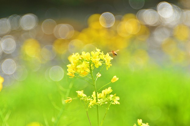 Photos: キラキラキラ ~春は輝いている~