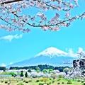 Photos: 必要火急の風景~富士&桜~