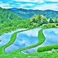Photos: 里山の風景 ~棚田~