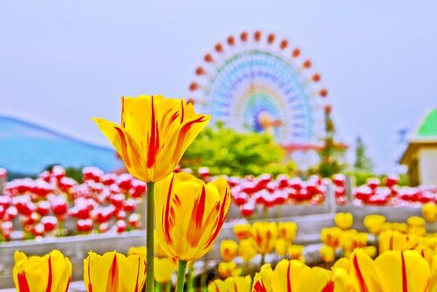 Photos: Pastel Color の風景