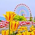 Pastel Color の風景