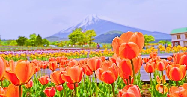Pastel Color の風景 ~Mt.FUJI~