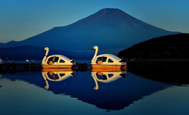 夜明けのスワン@山中湖
