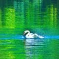 Photos: スワンの湖