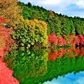 鏡面の秋景2020 ~南伊奈ヶ湖~