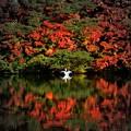 スワンの湖 ~秋~