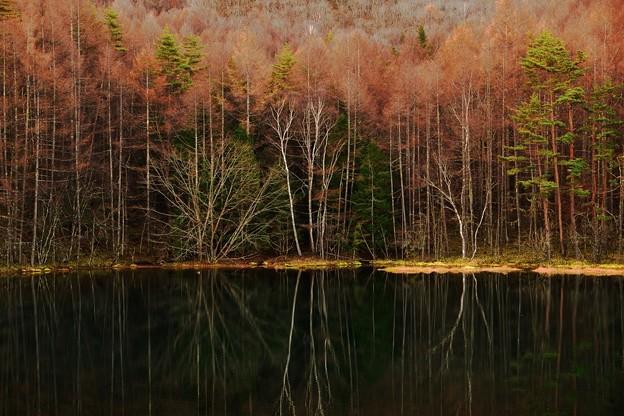 Photos: 冬が来る前に・・・Goto御射鹿池