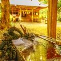 Photos: 黄金色に染まる・・・ ~二岡神社~