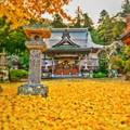 Photos: 黄金色に染まる・・・本立寺
