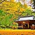 Photos: 黄金色に染まる・・・二岡神社 ~其の二~
