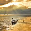 Photos: スワンの湖 ~光芒~