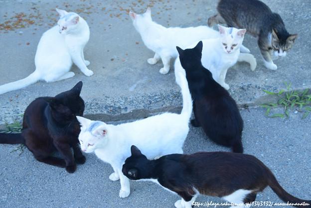 0002 ショウ1701さんのためのわさわさ猫