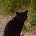Photos: 0048 ショウ1701さんのための黒猫『にゃにっ見てるっ』