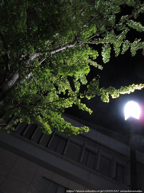 0054 初秋の夜