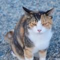 Photos: 0059 にらんじょる
